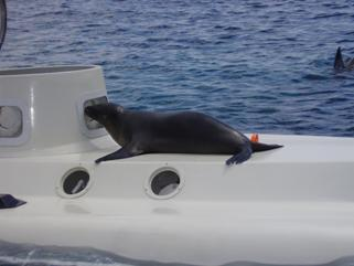 A seal takes a very close look at the submarine